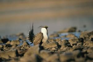 Photo Credit: Menke Dave, U.S. Fish and Wildlife Service