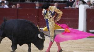 Bullfighting Fernando Vergara