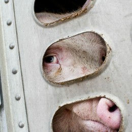 Stop Neglect and Abuse of Animals During Transport in Europe