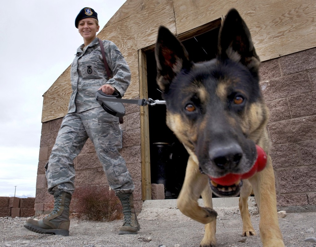 Success Military Dogs Will Be Sent Home Forcechange