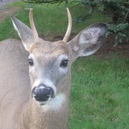 Justice for Beloved Deer Shot in Front of Family