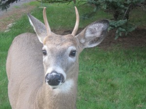 deer-by-SandJLikins