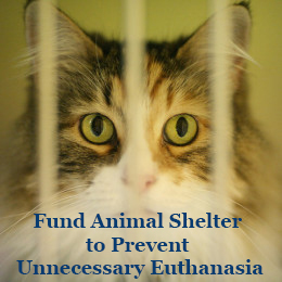 Fund-Animal-Shelter-to-Prevent-Unnecessary-Euthanasia
