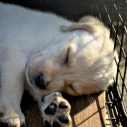 Justice for Puppies Found With Their Throats Cut