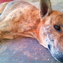 Praise Humane Population Control for Stray Dogs