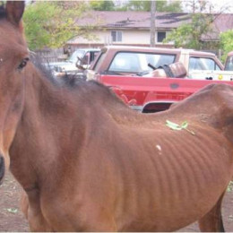 Rescue Apparently Malnourished Horses