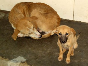 Dog-rescue-shelter-by-International Animal Rescue