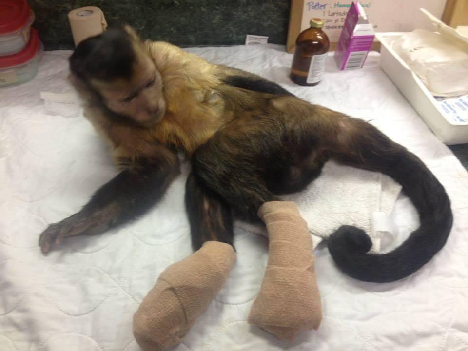 Demand Monkey Breeder Shut Down Operation Forcechange