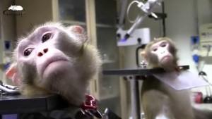 Monkeys Pro-Test Italia