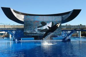 SeaWorld Michael Lowin