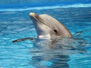 dolphin by dbmcclellan