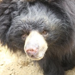 Thank Rescuers for Saving Abused Bear
