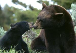 Black Bears by beingmyself