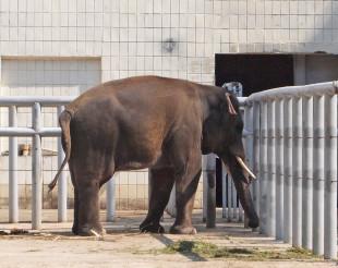 roter Elefant thailändische Christchurch
