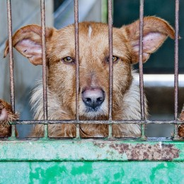 End Puppy Mills by Demanding Pet Shops Only Sell Rescue Animals