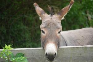 donkey-by-Moffi12