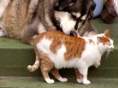 Cat and Dog by Qole Pejorian
