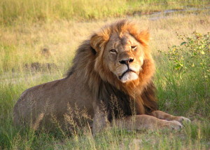 Cecilthelion-by-Daughter#3