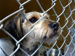 Shelter-dog-by-Dave-Parker