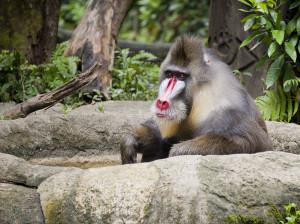 Zoo chensiyuan