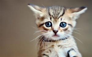cat_2830677b
