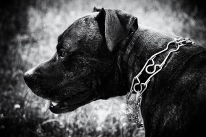 dog-by-Lukasz-Szmigiel