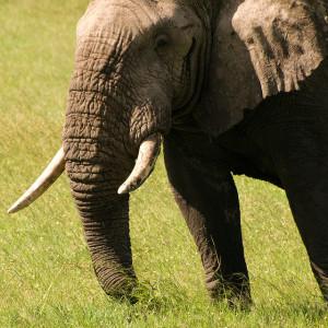 elephant_by_william_warby