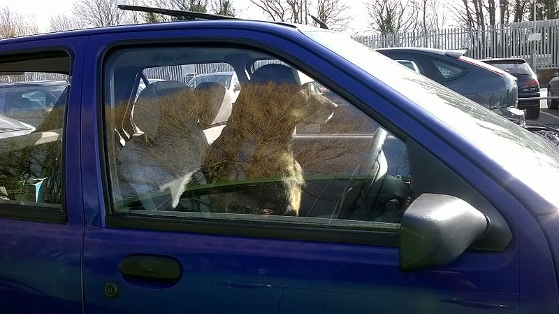allow pets to be rescued from deadly hot cars � forcechange