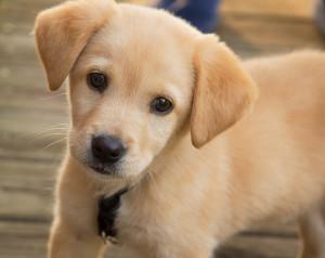 puppy_by_jonathan_kriz