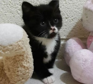 resuced-kitten-by-rspca