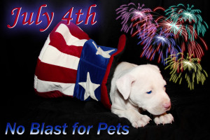 July-4-Fireworks-No-Blasts-for-Pets-By-Beverly-&-Pack