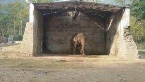 Kaavan Free Kaavan the Elephant