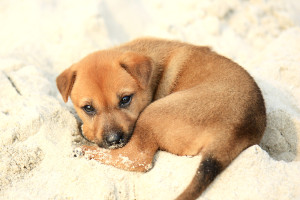 Puppy_on_Halong_Bay_by_Andrea_Schaffer