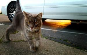 Stray Cat by Eric Sonstroem