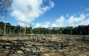 Deforestation_by_Dikshajhingan