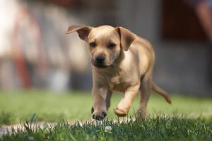 My-Little-Dog-by-Szlivka