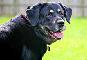 Dog-Dallas-Floer