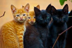 Kittens-Rakotondramanana