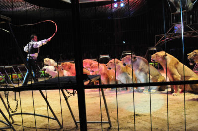 lions-in-circus-by-felicito-rustique-jr