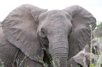 elephant-mister-e