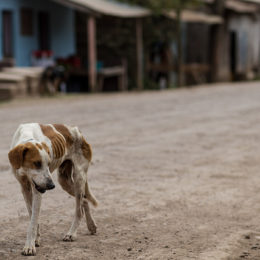 Halt Reported Mass Execution of Stray Dogs