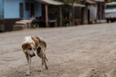 hungy-stray-dog-by-adam-cohn