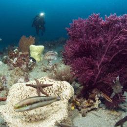 Photographer - Greg McFall/ONMS  Description - Seascape of ocean life taken at Gray's Reef National Marine Sanctuary, Savannah, GA (2006)  WOD submission