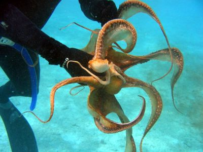 octopus-dr-dwayne-meadows