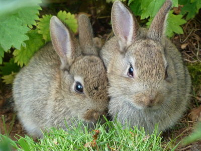 rabbits-worm-that-turned