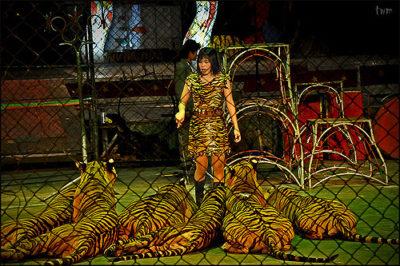 sriracha-tiger-zoo-jason-dright