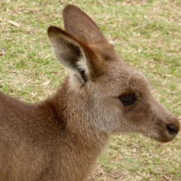 Stop Tourist Harassment of Kangaroos in China Zoo