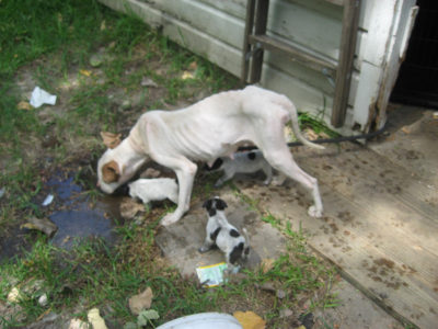 animalscruelty_joshh