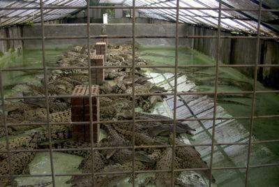 crocodile-farm-martinre