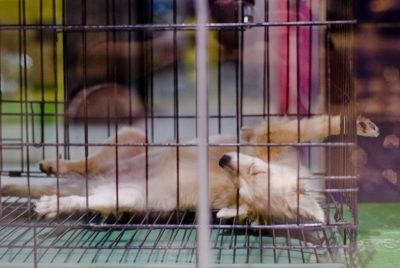 dog-in-cage-by-edward-allen-lim